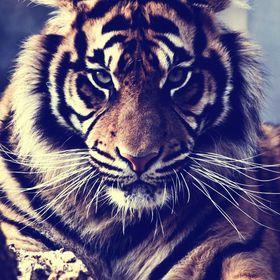 Tiger 8 Entertainment