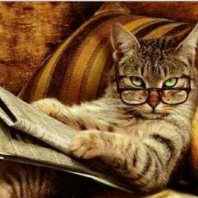 Le Chat Qui Tousse Lechatquitouss Sur Pinterest
