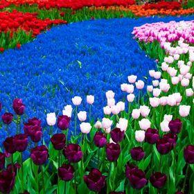 Dorota Kwiatek