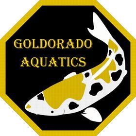 Goldorado Aquatics