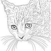 Minoes Fox