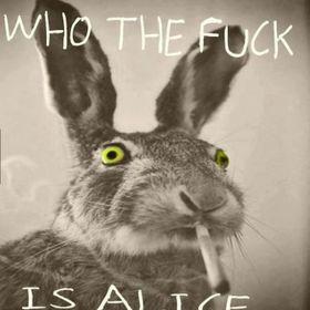 iguana the rabbit