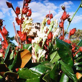 Blumm Flower