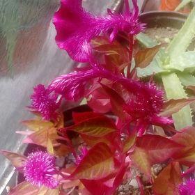5x 2-strand Rhinestone Diamante Pearl Flower Connectors Joiners Embellishment