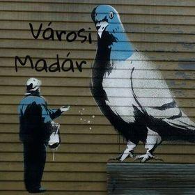 Városi Madár