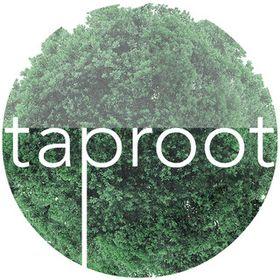 Taproot Studio