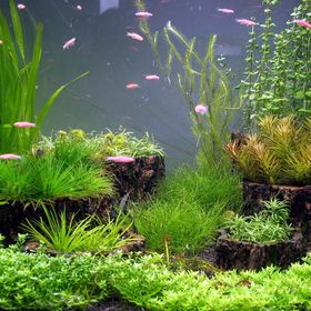 Aquarium123