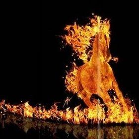Equus ignus