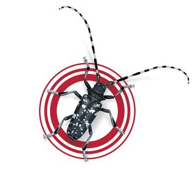 Stop the Asian Longhorned Beetle