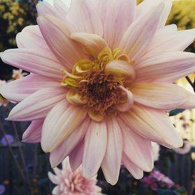 Ogródek.blog