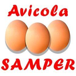 Avicola Samper