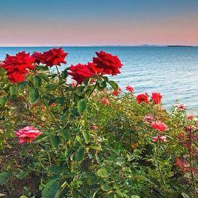 Seashore Rose Designs :)