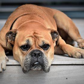 PetsHaunt - Hub Of Pets Honest Review