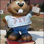I U P Punxsy