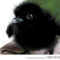 Ravenwing Flanary