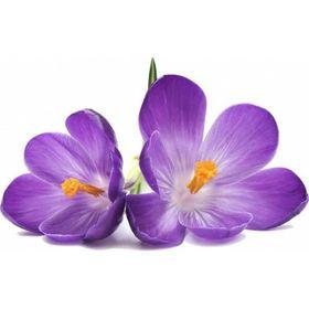 Violette59