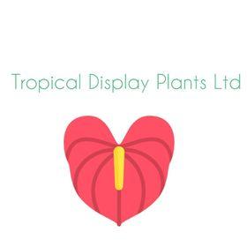 Tropical Display