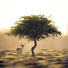 Naturalist A