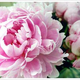 Elisma Rose