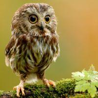 Bloggy Owl