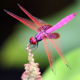 Dragonflies. reception