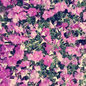 Murnyák Virág