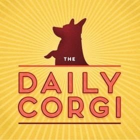 Daily Corgi
