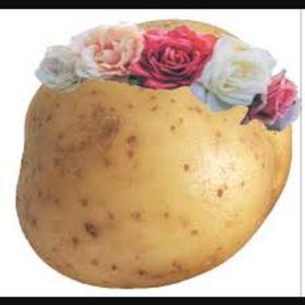 •~potato~•
