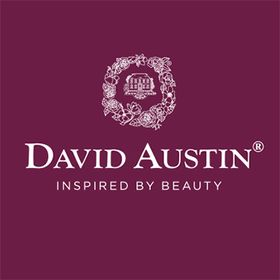David Austin Wedding & Event Roses