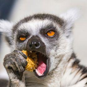 Laurence De Lemur