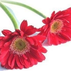 Berkeley Flowers