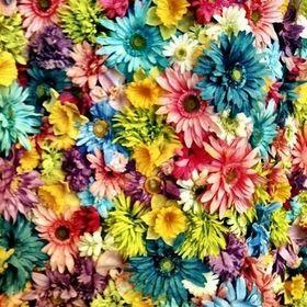 florencia vera