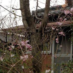 Ebisu's Kyoto International Guesthouse