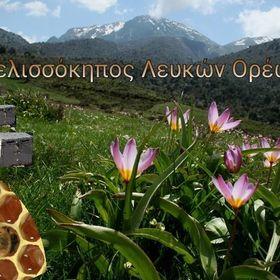 Cretan Bee Garden - Μελισσόκηπος Λευκών Ορέων