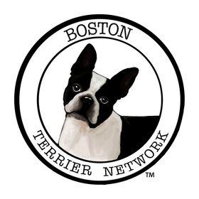 BOSTON TERRIER NETWORK