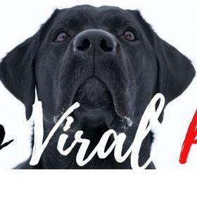 Top Viral Pets