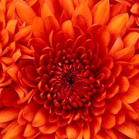 flor x