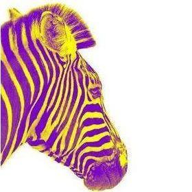 yellowpurplezebra