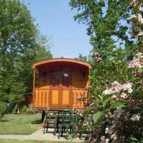 Les Roulottes de Bois le roi / Gypsy caravans - Forêt de Fontainebleau
