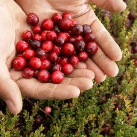 BC Cranberries