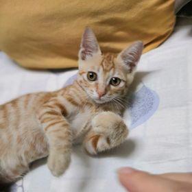 Cute Handsome Adjustable Pet Teddy Dog Cat Boy Baby Bow Tie Necktie Bowtie R TOOGOO