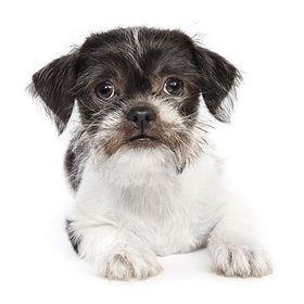 Southampton Animal Shelter Adopt a Shelter Pet