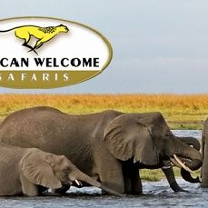 African Welcome