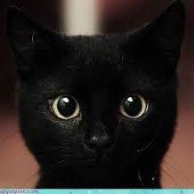 Cat Moore
