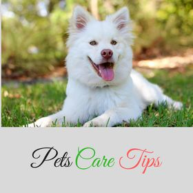 Pets Care Tips