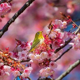 The Singing Bird