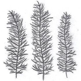 Three Cedars Artisans