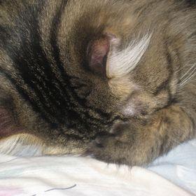 Pondering Cat