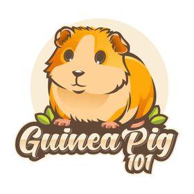 Guinea pig 101- Guinea pig Care | Guinea Pig Tips And More