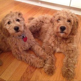 Tedi & Telly